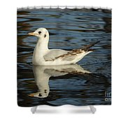 Fall In The Lake In Vienna No.2 Shower Curtain