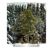 Fall Into Winter Shower Curtain