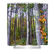 Fall Ivy In Pine Tree Forest Shower Curtain