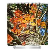 Fall Ivy On Pine Tree Shower Curtain