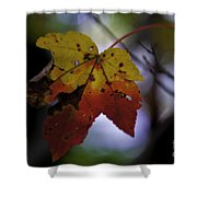 Red And Yellow Maple Leaf Shower Curtain