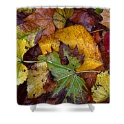 Fall Leaves 1 Shower Curtain
