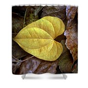 Fall Leaves 4 Shower Curtain