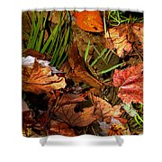 Fall Leaves 5 Shower Curtain