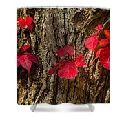 Fall Leaves Against Tree Trunk Shower Curtain