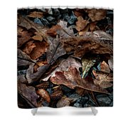 Fall Leaves And Acorns Shower Curtain