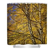 Fall Leaves And Trees In West Michigan No171 Shower Curtain