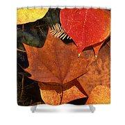 Fall Leaves I I Shower Curtain