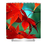 Fall Leaves In All Their Glory Shower Curtain