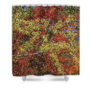 Fall Leaves In So Cal Shower Curtain