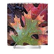Fall Leaves I V Shower Curtain
