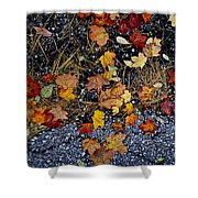 Fall Leaves On Pavement Shower Curtain by Elena Elisseeva