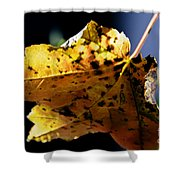 Fall Maple Leaf Shower Curtain
