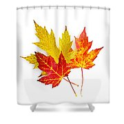 Fall Maple Leaves On White Shower Curtain