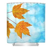 Fall Maple Leaves Trio With Blue Sky Shower Curtain