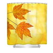 Fall Maple Leaves Trio With Bokeh Background Shower Curtain