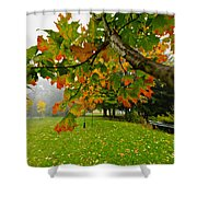 Fall Maple Tree In Foggy Park Shower Curtain