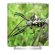 Fall Meadow Spider - Argiope Aurantia Shower Curtain