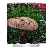 Fall Mushrooms Shower Curtain