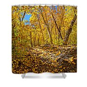 Fall On The Forest Floor Shower Curtain
