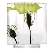 Fall On White Shower Curtain