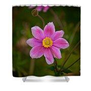 Fall Pink Daisy Shower Curtain