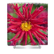 Fall Rains Shower Curtain