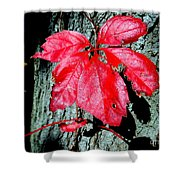 Fall Red Leaf Shower Curtain