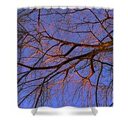 Fall Reflections By Diana Sainz Shower Curtain