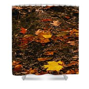 Fall Stream Bed Shower Curtain