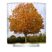 Fall Sugar Maple Shower Curtain
