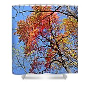 Fall Trees 2 Of Wnc Shower Curtain