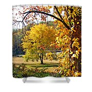 Fall Trees 4 Of Wnc Shower Curtain