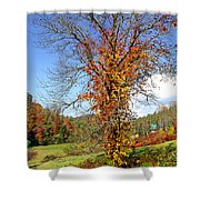 Fall Trees 5 Of Wnc Shower Curtain