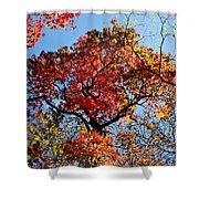Fall Trees Of Wnc Shower Curtain