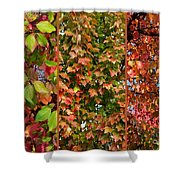 Fall Trio Collage Shower Curtain