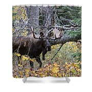 Fall Warrior Shower Curtain