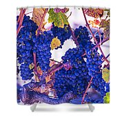 Fall Wine Grapes Shower Curtain