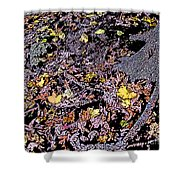 Fallen Autumn Leaves Among The Roots Shower Curtain