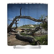 Fallen Dead Torrey Pine Trunk At Torrey Pines State Natural Reserve Shower Curtain