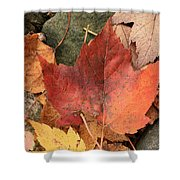 Fallen Leaves Shower Curtain