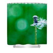 Fallen Off Dandelion - Featured 3 Shower Curtain