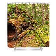 Fallen Rainforest Giant Shower Curtain