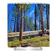 Fallen Sequoia In Mariposa Grove In Yosemite National Park-california Shower Curtain