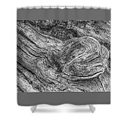 Fallen Tree Bark Bw Shower Curtain