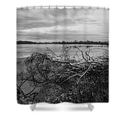 Fallen Trees At The Lake Shower Curtain