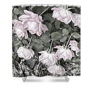 Falling Roses Shower Curtain