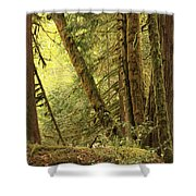 Falling Trees In The Rainforest Shower Curtain