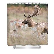 Fallow Deer Buck Shower Curtain