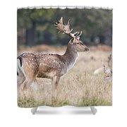 Fallow Deer Buck On Guard  Shower Curtain
